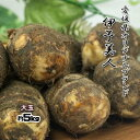 伊予美人 里芋 愛媛県産 大玉 サトイモ 約5kg 送料無料 箱買い 野菜