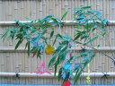 Tanabataset