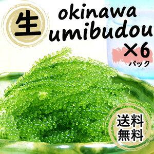 (P5倍)【生】海ぶどう6パックセット(100g×6)お取り寄せ グルメ おつまみ 沖縄 お土産