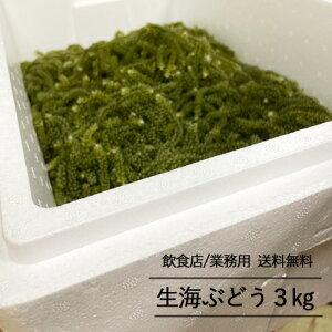【飲食店・業務用専用】生海ぶどう3kg(タレ無し)送料無料 飲食店用 業務用