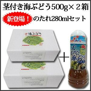 【セットがお得!】茎付き海ぶどう500g×2箱 たれ(ボトル)セット