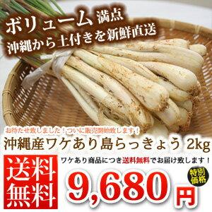 島らっきょう 土付き(約2kg) 当店では伊江島産島らっきょうをお届けしまうす。 沖縄の島らっきょう 島ラッキョウ