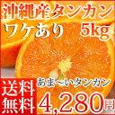 沖縄産訳ありタンカン5kg【お届け日指定不可】