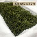 【飲食店等業務用】茎付き海ぶどう2kg(タレ無し)送料無料