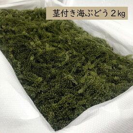 【飲食店等業務用】茎付き海ぶどう2kg(タレ無し)送料無料 業務用