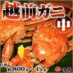 越前ガニ(中)福井県産越前がに・蟹約800g〜1kg×1杯【ご贈答にも最適】