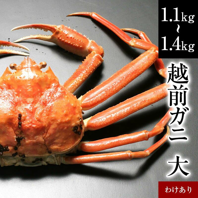わけありガニ(大)福井県産越前かに(訳あり越前ガニ・足折れ蟹)1杯 約 1kg〜1.3kg【ずわいがに・蟹】[冷蔵]