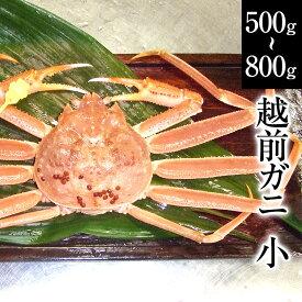 父の日 お中元 敬老の日 越前ガニ(小)福井県産越前がに・蟹 約500g〜800g×1杯 [冷蔵]