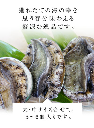 アワビ(500g)新鮮・海の幸天然の日本海産あわび獲れたてを産地直送[冷蔵]