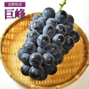 巨峰 長野県産 ぶどう 芳醇な甘み 贈答用 産地直送 ギフト 2kg 4房入り ブドウ 葡萄 きょほう budou 果物 くだもの 長野 信州 甘い みずみずしい 農家直送