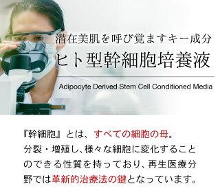 ヒト型幹細胞