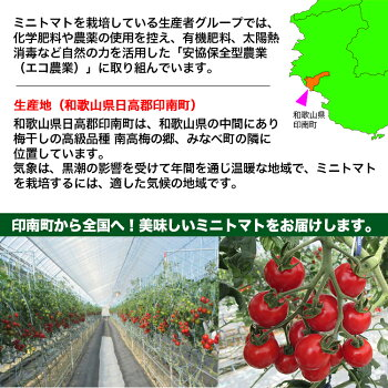 【送料無料】【ミニトマト】赤糖房(あかとんぼ)約160g×6パック入りフルーツ感覚!