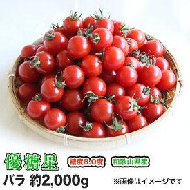 【送料無料】【ミニトマト】【高糖度】【甘い】優糖星(ゆうとうせい) バラ 約2,000gフルーツ感覚!【まとめ買い割引あり】【フルーツトマト】