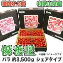 【500円OFFクーポン配布中】【送料無料】【ミニトマト】優糖星(ゆうとうせい) バラ 約3,500gシェアタイプ!