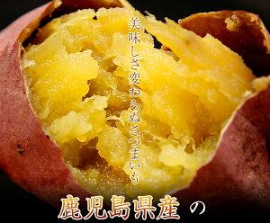 令和2年産 新安納芋 5kg 鹿児島県産 【新芋】