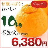 不知火 デコポン!不知火(デコポン) 10kg 熊本県産 【不知火】【デコポン】【10kg】