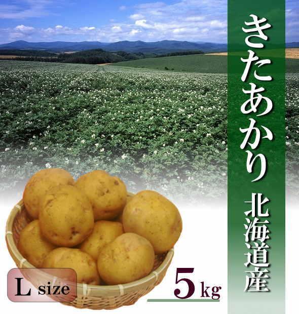 【送料無料】北海道産新じゃが「きたあかり」 Lサイズ 5kg