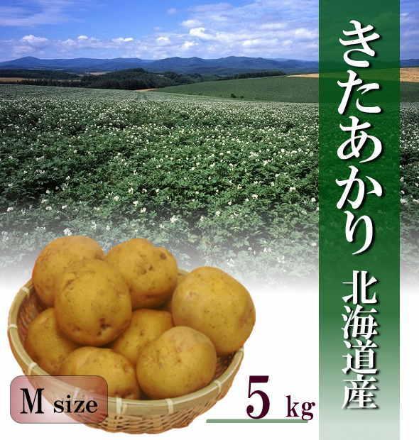 【送料無料】北海道産じゃがいも「きたあかり」Mサイズ 5kg【新じゃが】
