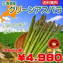 【送料無料】北海道産グリーンアスパラ Lサイズ1.5kg(150g×10束)