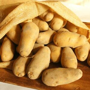 ジャガイモ 10kg 北海道産 訳あり 送料無料 メークイン 厚沢部町産 お得 じゃがいも