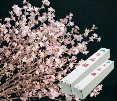2019年冬に咲く 桜でお花見気分が楽しめます奈良県吉野の啓翁桜『啓翁桜(けいおうさくら)』桜 花束誕生日プレゼントに桜の花束