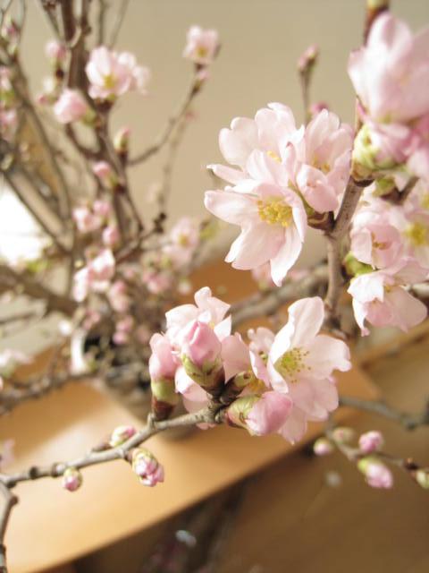 啓翁桜  プレゼントに お祝い事の贈り物に  贈り物に最適【送料無料】桜:『啓翁桜(けいおうさくら)』桜の花束 ギフト贈り物に最適です。