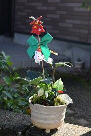 クリスマスローズ鉢植えクリスマスローズ2018年12月開花株純白のクリスマスローズを贈り物【クリスマスプレゼント】クリスマスローズニゲル