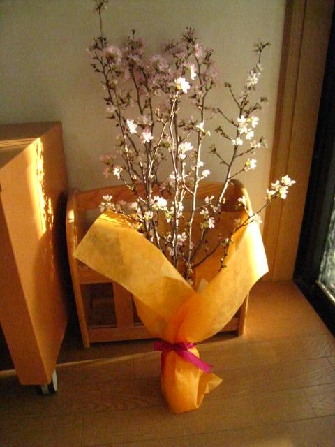 プレゼントに 奈良県吉野啓翁桜お祝い事の贈り物に啓翁桜 奈良吉野啓翁桜 【送料無料】桜『啓翁桜(けいおうさくら)』桜の花束