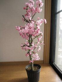 植樹におすすめ2020年4月に開花の苗【ハナカイドウサクラ】 桜苗【花海棠 】【桜】大苗桜庭木ハナカイドウ 当店おすすめです