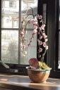 おすすめしだれ梅盆栽シダレウメ八重咲のピンク色と 香りの贈り物2017年開花3月初め頃 ミニしだれ梅盆栽 ちなみに海外でも BONSAI ボンサイ