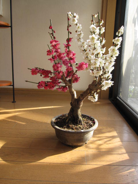 Amazing Pin By Denise Heather On Aa Trees And Bonsai