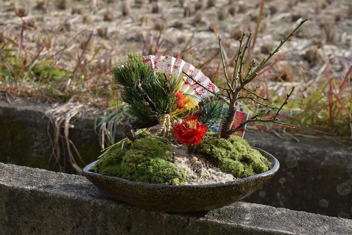 新春盆栽お祝い紅白寄せ植え寿梅盆栽 【盆栽】信楽焼き入り紅白梅盆栽 ラッピング込み