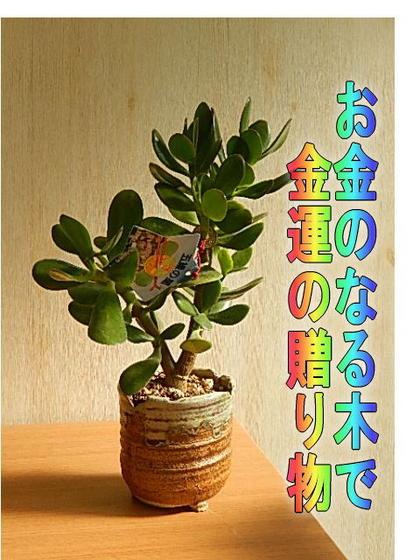 金運アップ金のなる木多肉植物 【観葉植物】花月