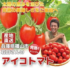 【アイコトマト2kg】 アイコトマト プチトマト 朝採り 高糖度 完熟ミニトマト  兵庫県産 丹波篠山産