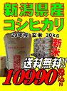 新米29年産新潟県産 コシヒカリ 玄米 30kg お米 【smtb-TD】【saitama】【あす楽_土曜営業】【あす楽_日曜営業】【送…
