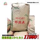 令和元年産新潟県産 コシヒカリ 玄米 30kg お米 【smtb-TD】【saitama】【あす楽_土曜営業】【あす楽_日曜営業】【送…