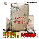 令和2年産新潟県産 コシヒカリ 玄米 30kg お米 【smtb-TD】【saitama】【あす楽_土曜営業】【あす楽_日曜営業】【送料…