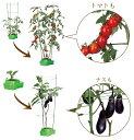 【送料無料】家庭菜園(水耕栽培)キット『私の畑』
