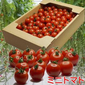 ミニトマト(2kg)徳島県みのるファーム 72-197RZ(オランダ:ライク・ズワーン社 推奨品種 ミニトマト)アジアGAP認証