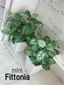 ミニフィットニア 18cm 造花 フェイクグリーン 光触媒 CT触媒 観葉植物