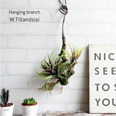 ハンギングブランチ W チランジア エアプランツ 観葉植物 造花 CT触媒 吊り下げ