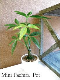 ミニパキラポット 3593【造花】【ミニ観葉】【光触媒・CT触媒】【造花 観葉植物 小型】