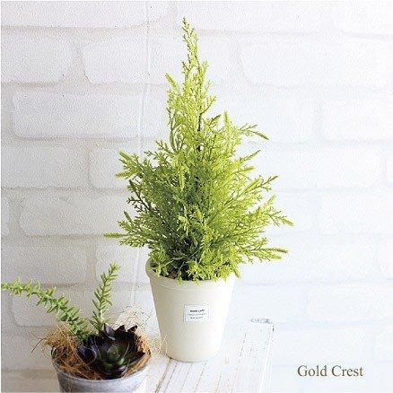 ゴールドクレスト白鉢 H35 人工観葉植物 造花 インテリア フェイクグリーン CT触媒