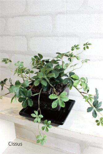 シュガーバイン シサスアイビープラント 黒四角鉢皿 造花 観葉植物 人工観葉植物 インテリア CT触媒 フェイクグリーン ギフト