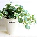 プミラ H20 造花 CT触媒 フェイクグリーン 観葉植物