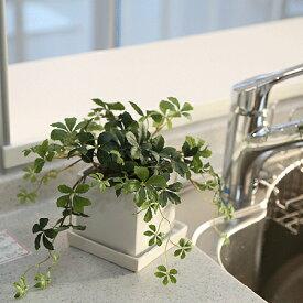 シサスアイビー シュガーバインプラント 四角鉢皿付 観葉植物 造花 インテリア 光触媒 CT触媒 ミニ フェイクグリーン 葉っぱ花 アレンジ おしゃれ リアル カフェ 玄関 リビング キッチン
