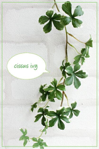 消臭スプレーS.ミニシサスアイビーバイン (シュガーバイン)ヴァリケイドグリーン41132 人気のシサスでかわいく消臭 造花 光触媒 CT触媒 フェイクグリーン 観葉植物 インテリア