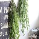 ホヤ・リネアリス *Hoya Linearis 造花 インテリア 観葉植物 CT触媒 フェイクグリーン