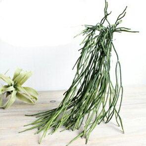 ミルクブッシュハンガー 造花 インテリア 観葉植物 CT触媒 フェイクグリーン
