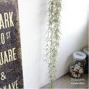 スパニッシュモス*チランジア ウスネオイデス ティランジア ティランドシア 観葉植物 フェイクグリーン 造花 インテリア CT触媒